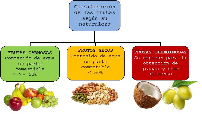 Frutas y hortalizas verduras composici n y propiedades for Botanica general pdf
