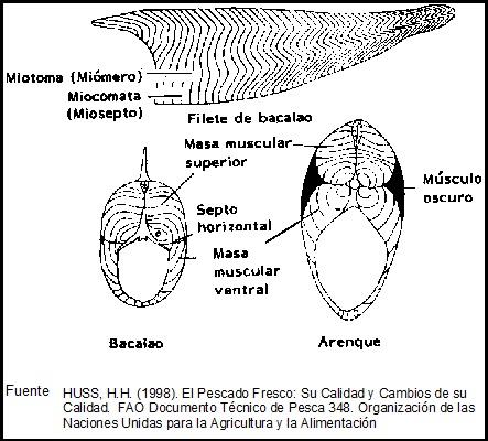 Pescados y Mariscos: Composición y Propiedades - Edualimentaria.com