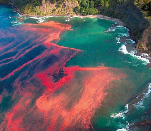 Marea roja algas yahoo dating