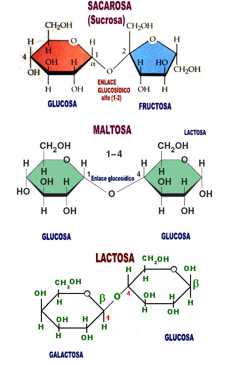 Cual es la diferencia entre glucosa fructosa y sacarosa